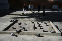68_pigeons-in-the-square.jpg